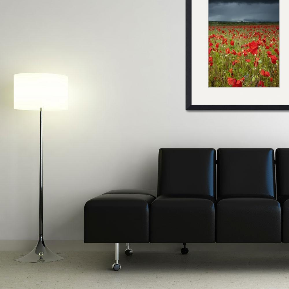 """""""Poppies In A Field Under A Stormy Sky Northumberl&quot  by DesignPics"""