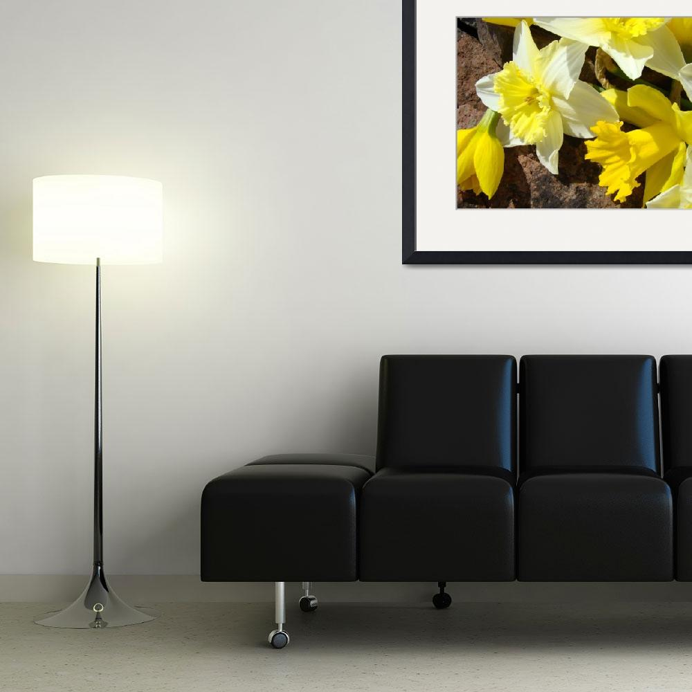 """Daffodils Garden 14 Spring Daffodil Flowers Art&quot  (2009) by BasleeTroutman"