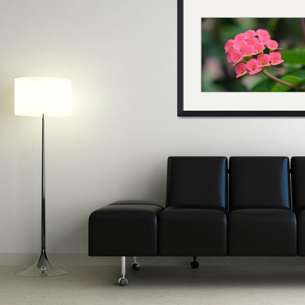 """""""Pink Multiple Blooming Flower&quot  (2014) by jdlord"""