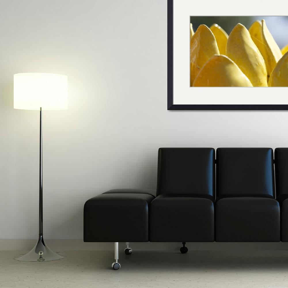 """""""Yellow Ceramic Lotus&quot  (2014) by joelrichter"""