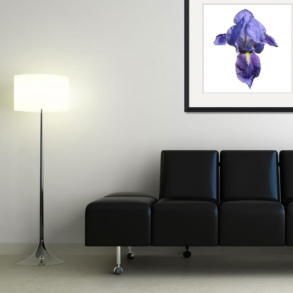 """""""Blue Iris flower&quot  (2009) by yio"""