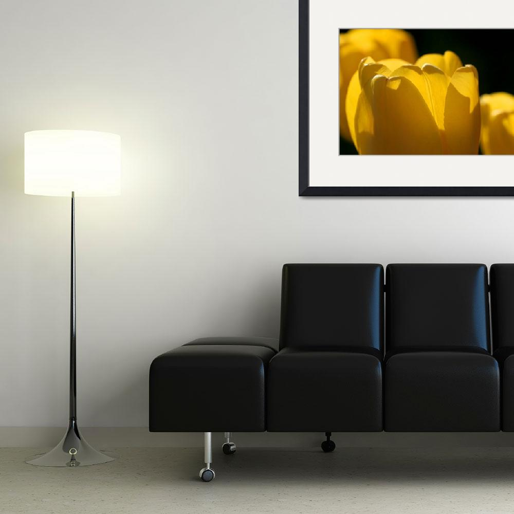 """Yellow Tulips with Black Background&quot  (2016) by KsWorldArt"