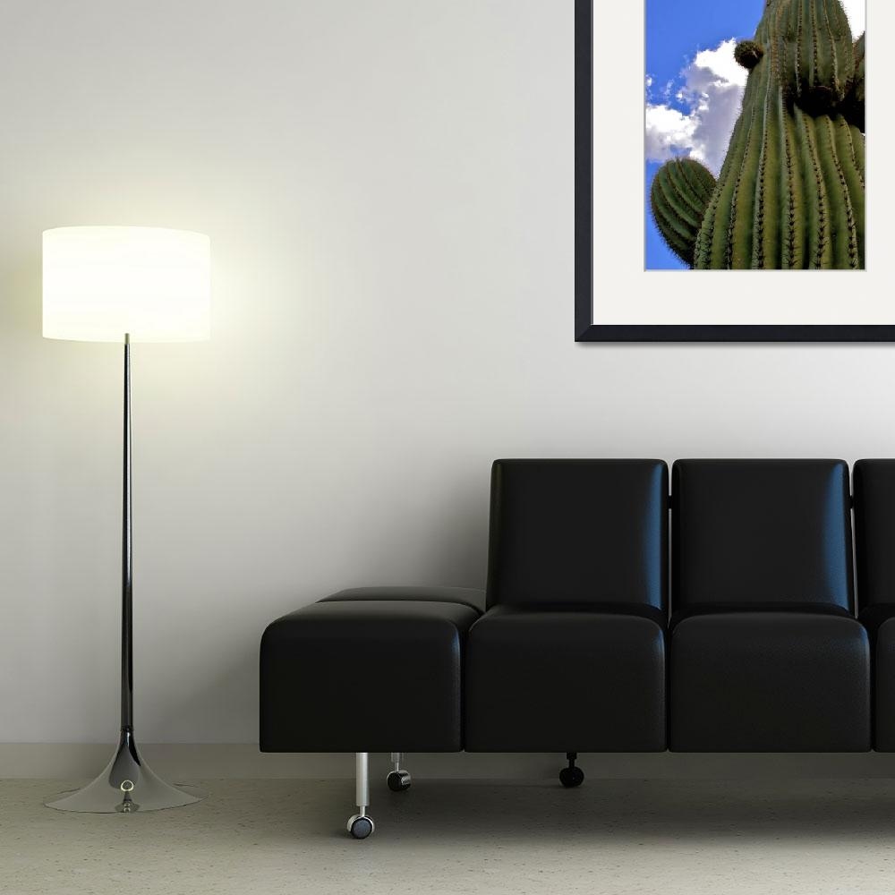 """""""Cactus 1&quot  (2011) by AndriesK"""