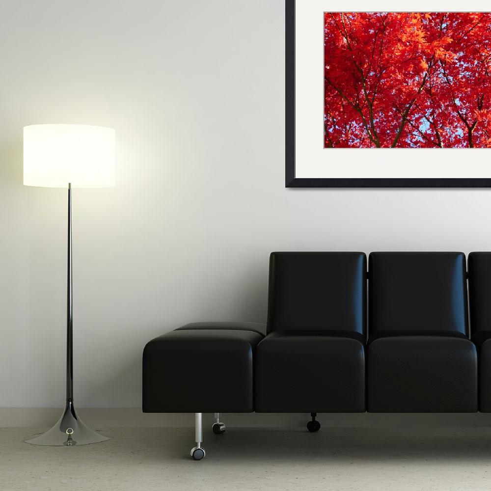"""""""Red Maple""""  (2015) by Don_Leon"""