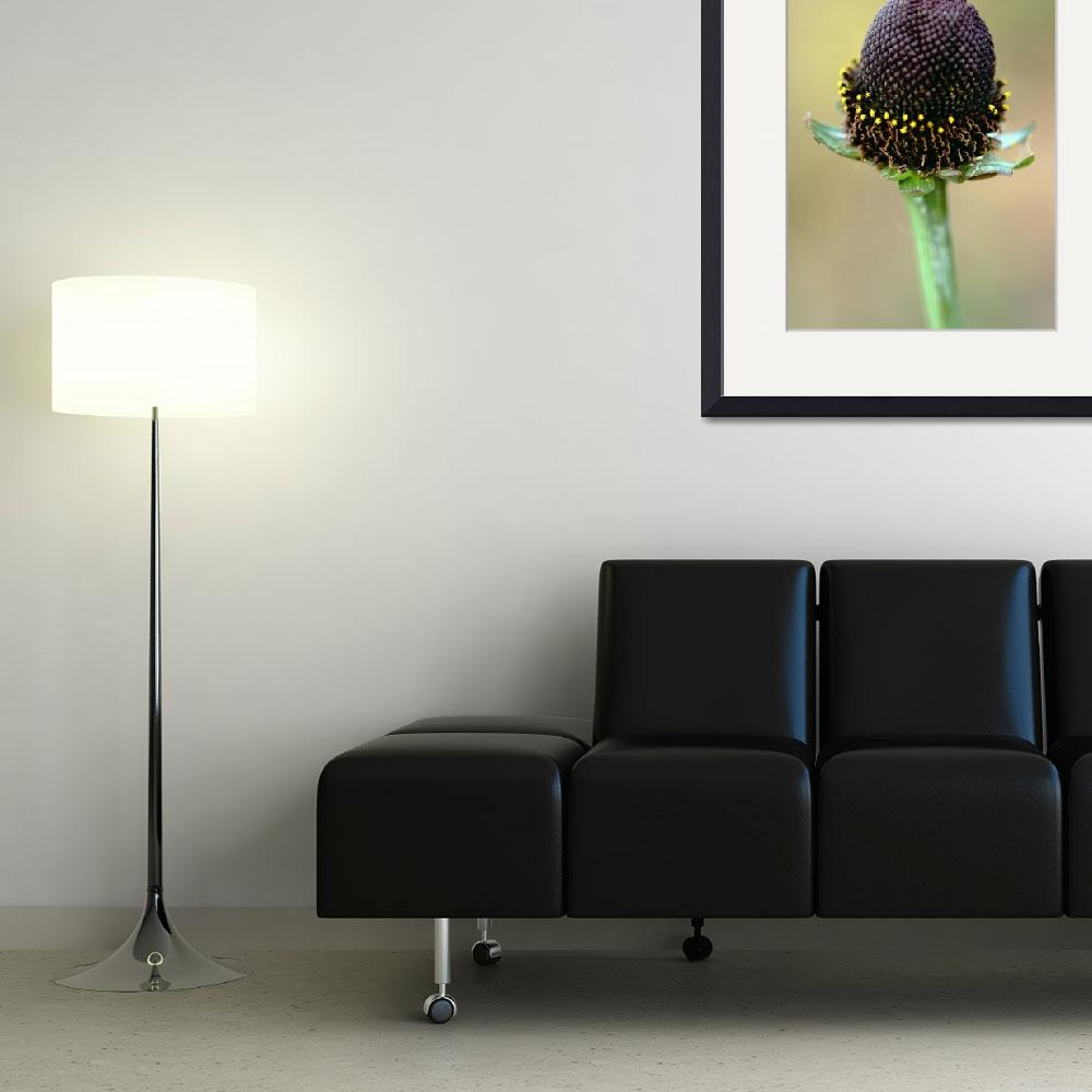 """""""WesternRaylessConeflower_6962.jpg&quot  by marchenland"""