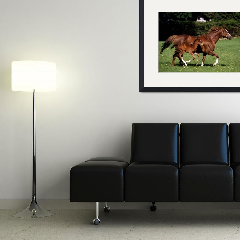 """""""Thoroughbred Mare And Foal Galloping, Ireland&quot  by DesignPics"""