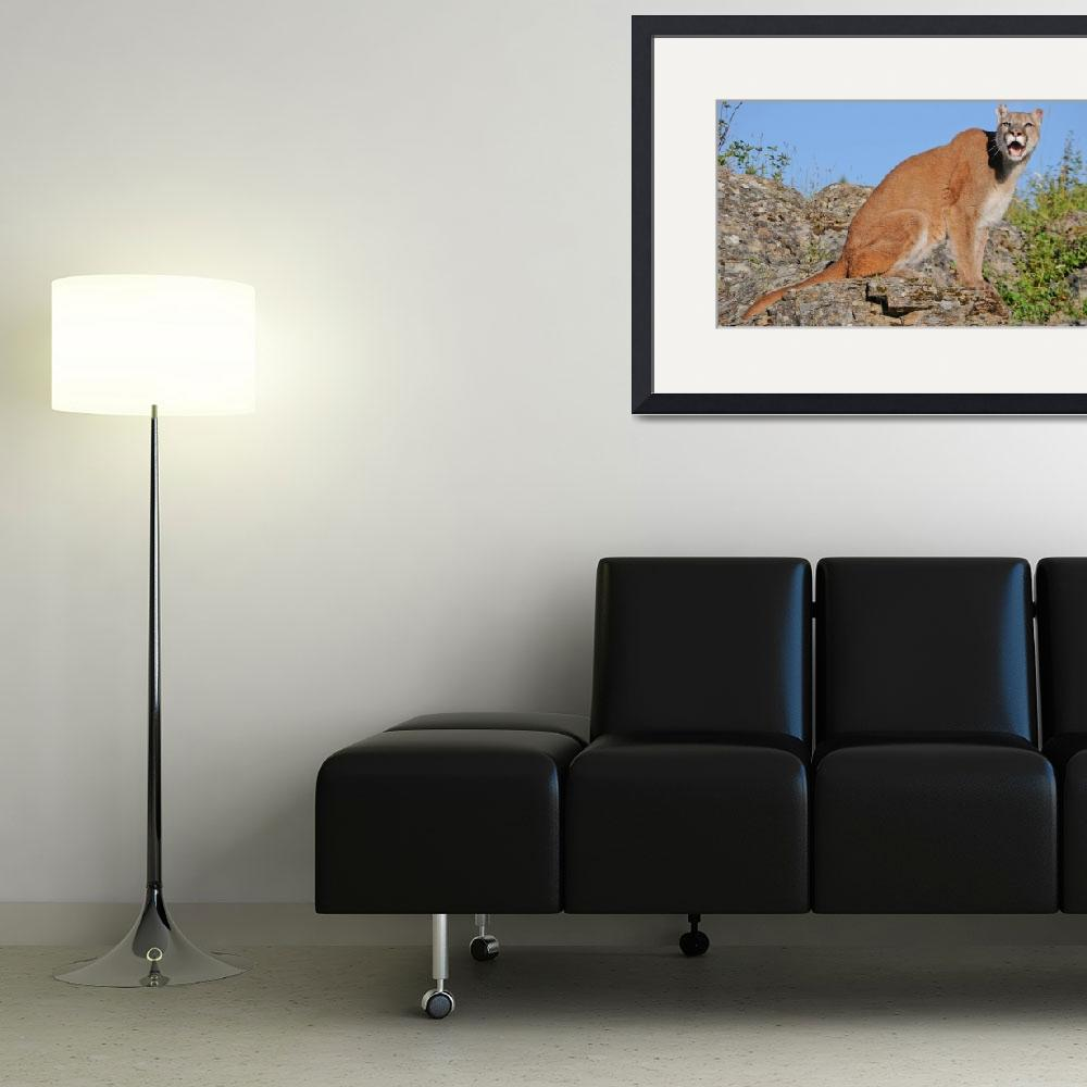 """""""Mountain Lion&quot  (2014) by FotosbyCindy"""