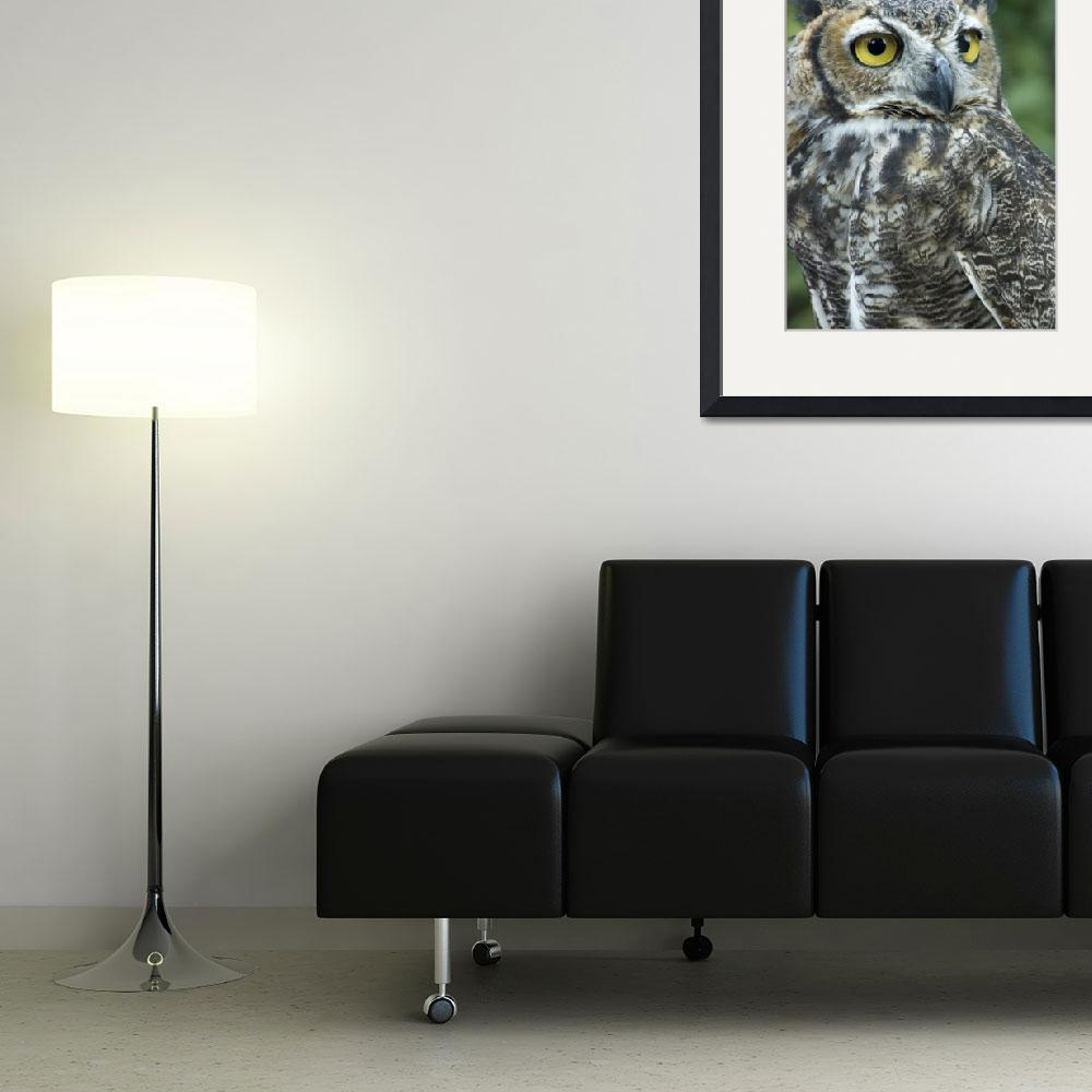 """""""Great Horned Owl&quot  by SolLeonard"""