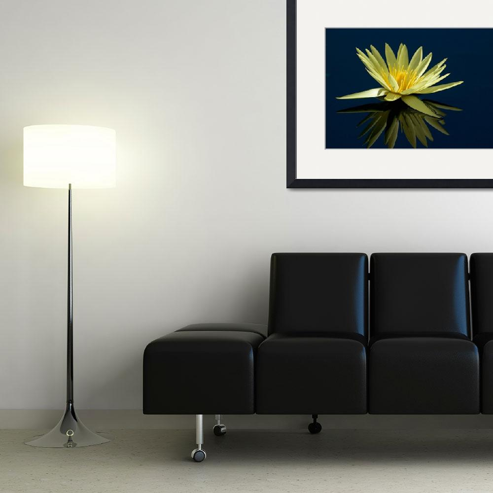 """""""Water lilly and Reflection&quot  by alcaporaso"""