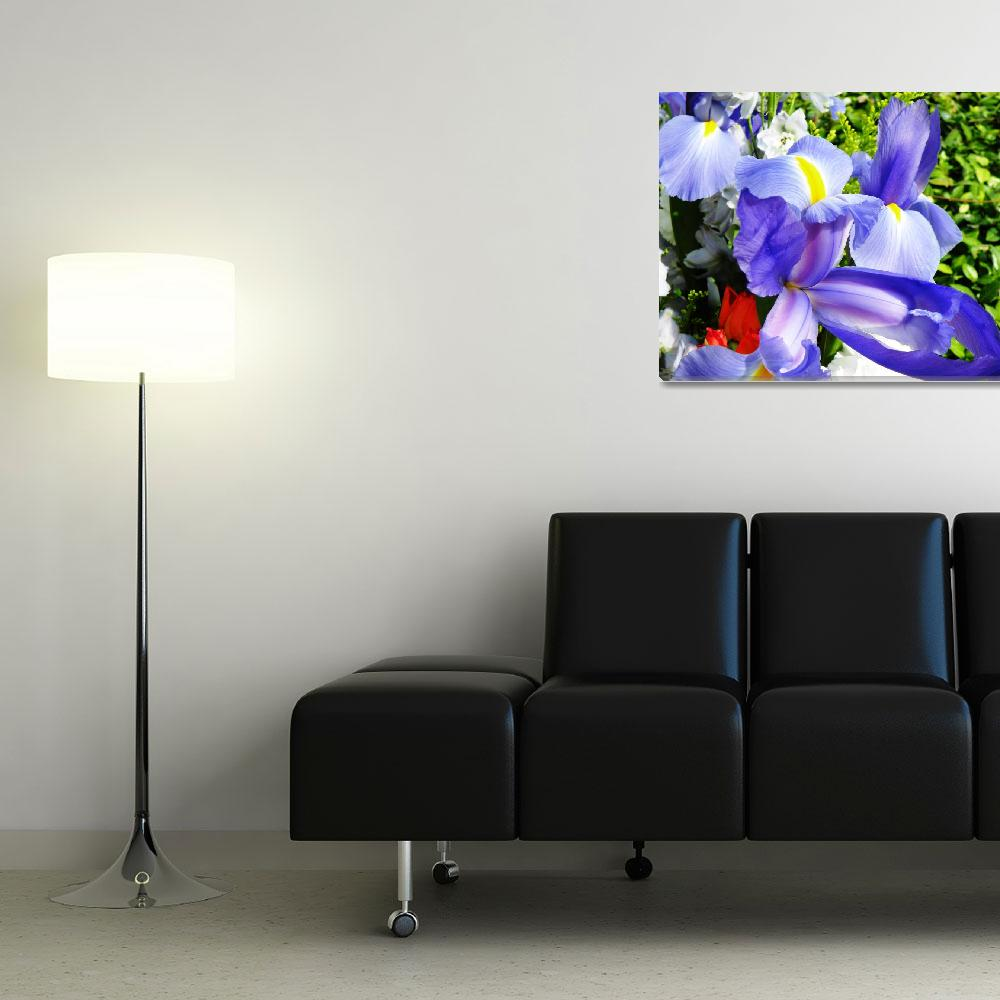 """""""Iris - A Wonder to Behold""""  (2008) by stevenphill"""