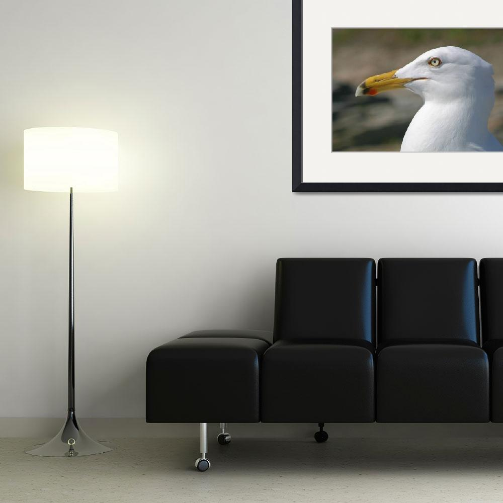 """""""Seagull portrait (gull210_1046)&quot  (2004) by nelights"""