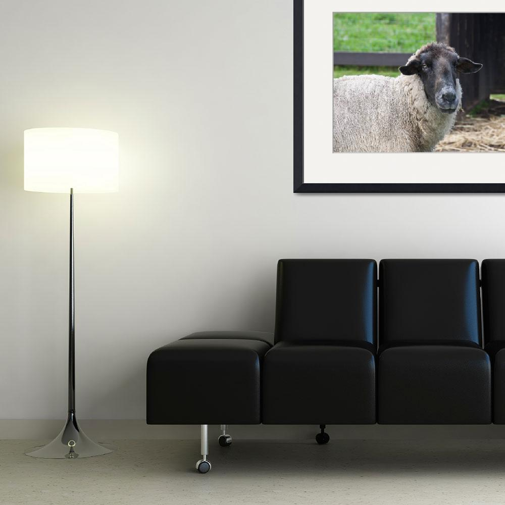 """""""Portrait of a Sheep&quot  (2011) by RobinCowles"""