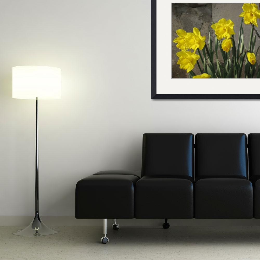 """""""daffodils""""  (2009) by pkstoesser"""