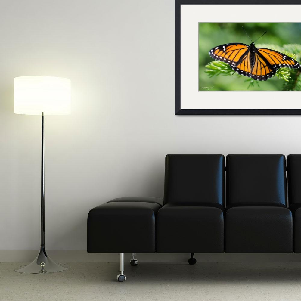 """""""Viceroy Butterfly 021&quot  (2014) by Northernguy"""