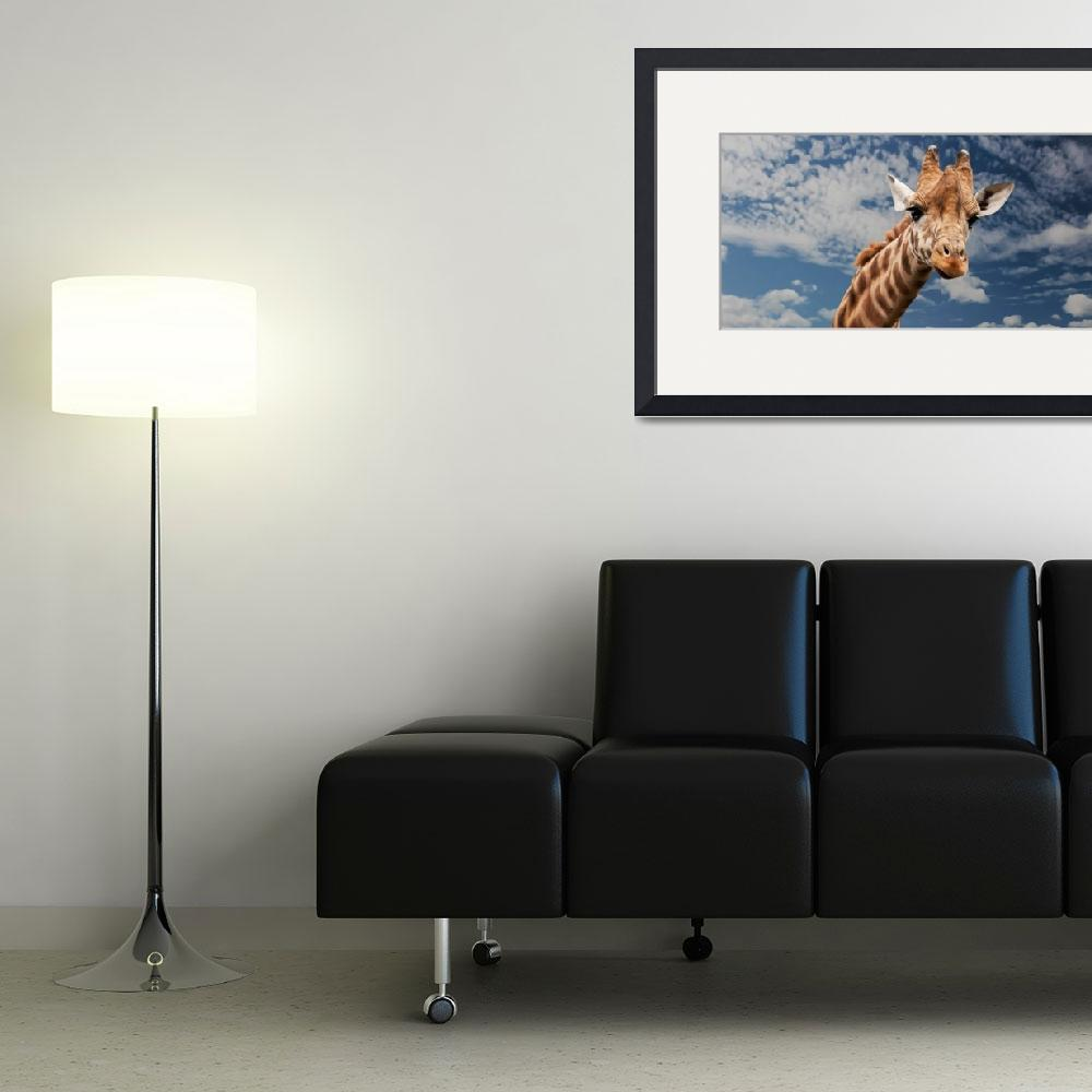 """""""Haselden Collection Framed Print&quot  by buddakats1"""