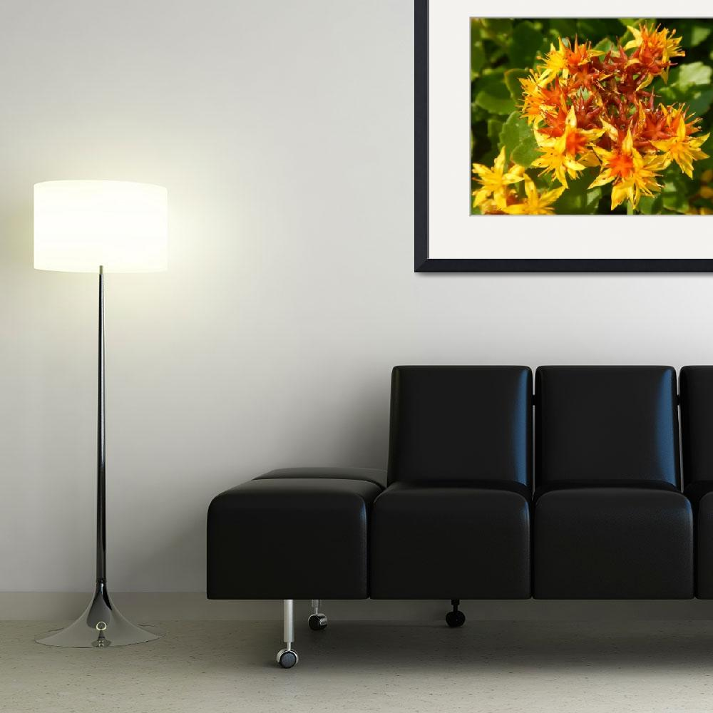 """""""Yellow and orange flowers&quot  by abbyphotography"""