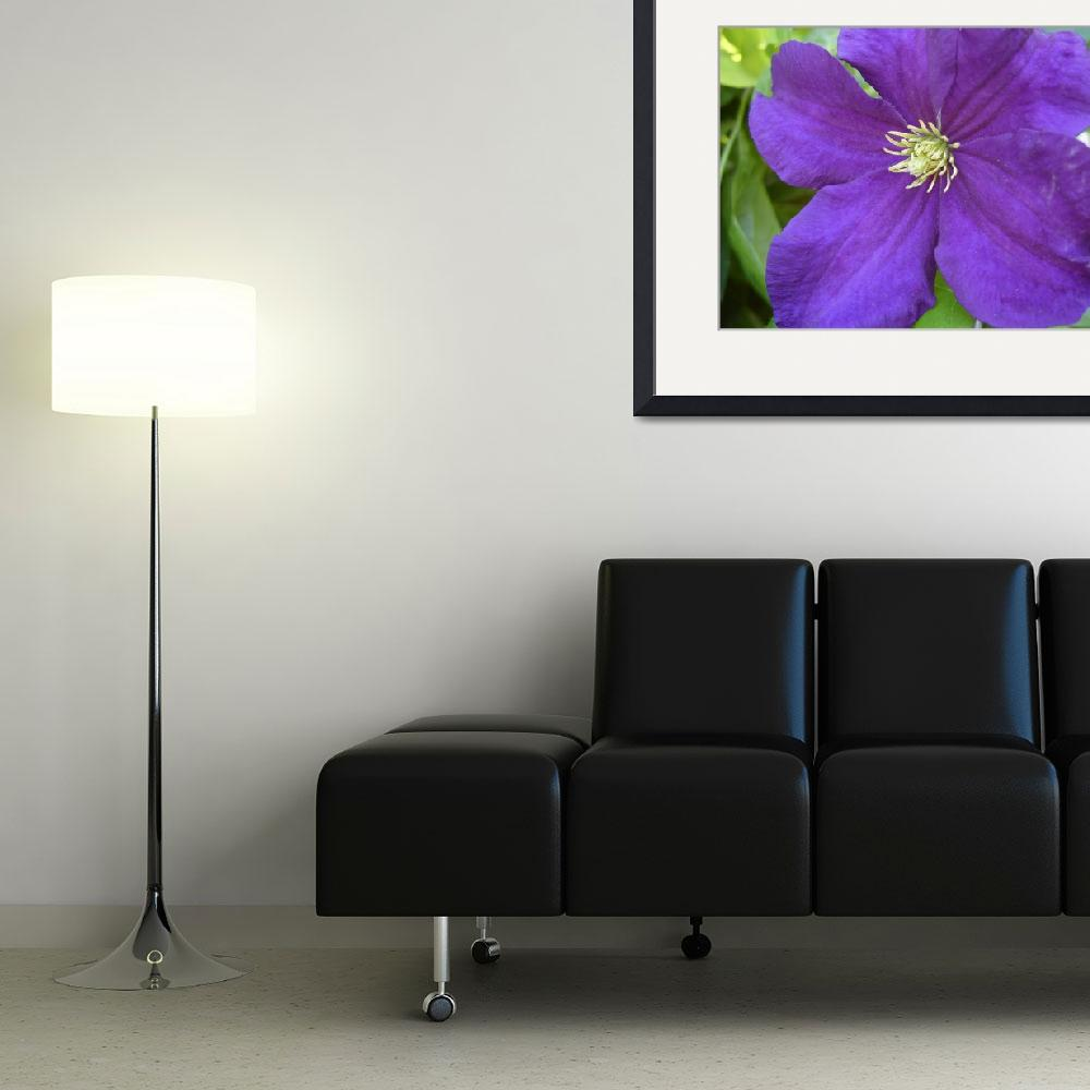 """""""Clematis in The Garden&quot  by Lin"""