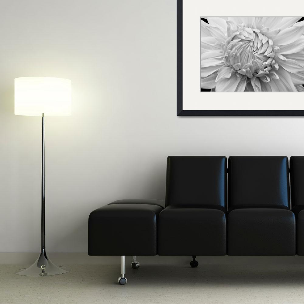 """""""Overlapping Petals""""  (2010) by RussMartinPhotography"""