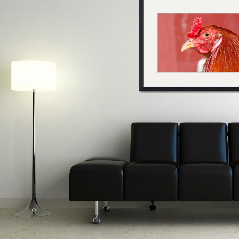 """""""Rooster Close-Up on Red&quot  (2011) by lightningman"""