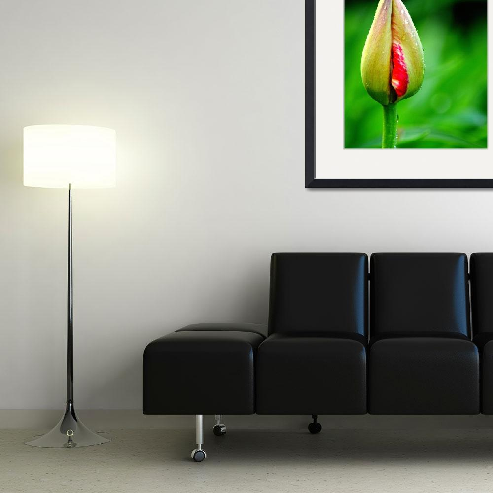 """""""Tulip Bud&quot  (2014) by joanhan"""