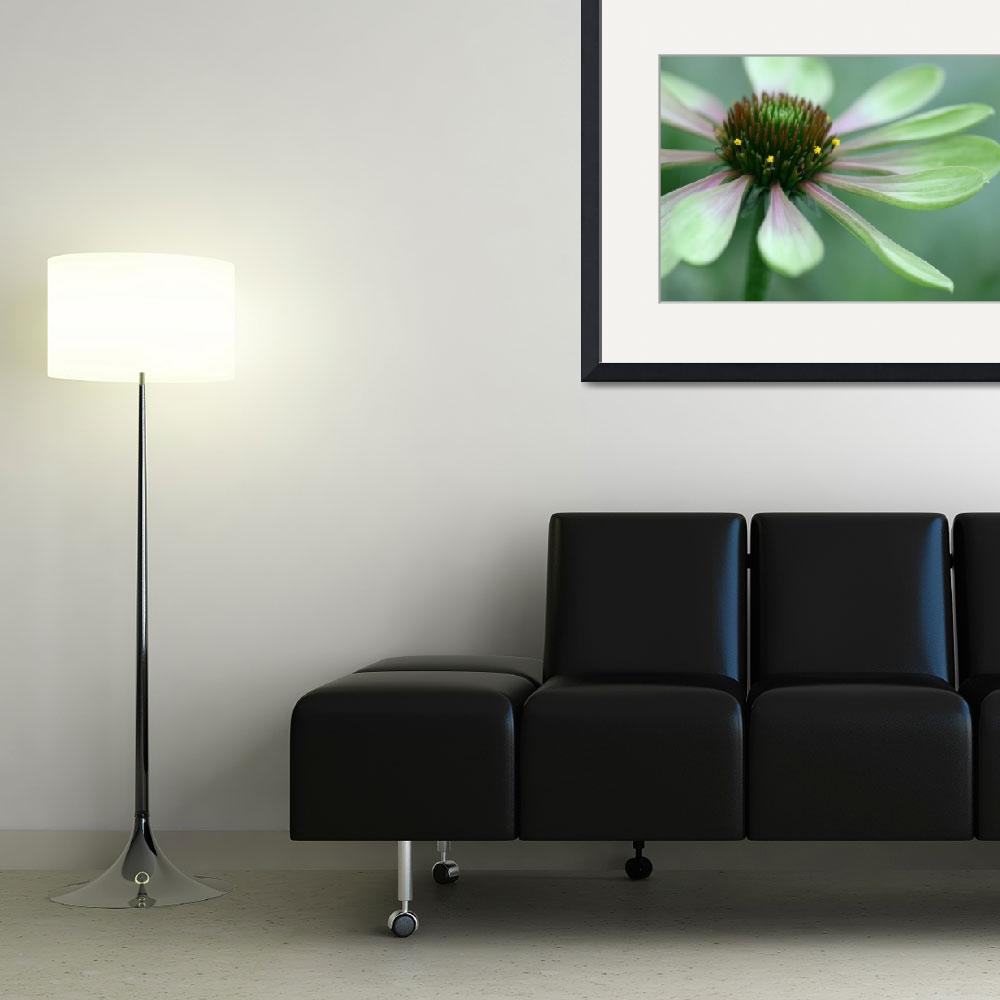 """""""Echinacea - Green Envy&quot  (2008) by SolacePointe"""