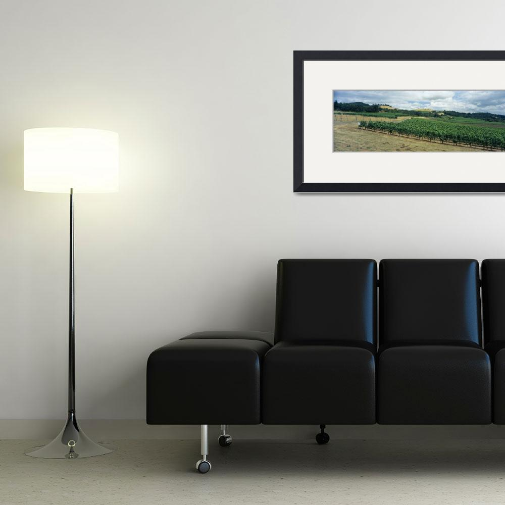 """""""Grape vines in a vineyard&quot  by Panoramic_Images"""