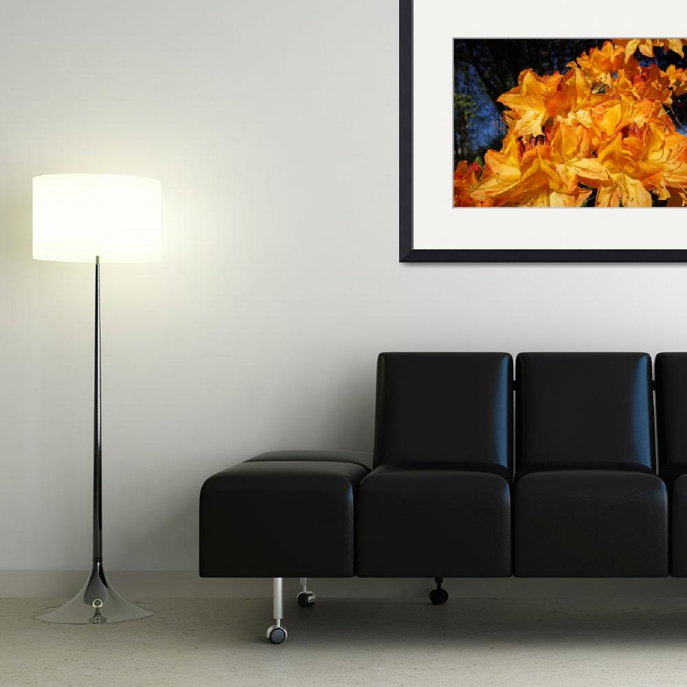 """""""Orange Rhododendrons Flowers Photography Art&quot  (2014) by BasleeTroutman"""