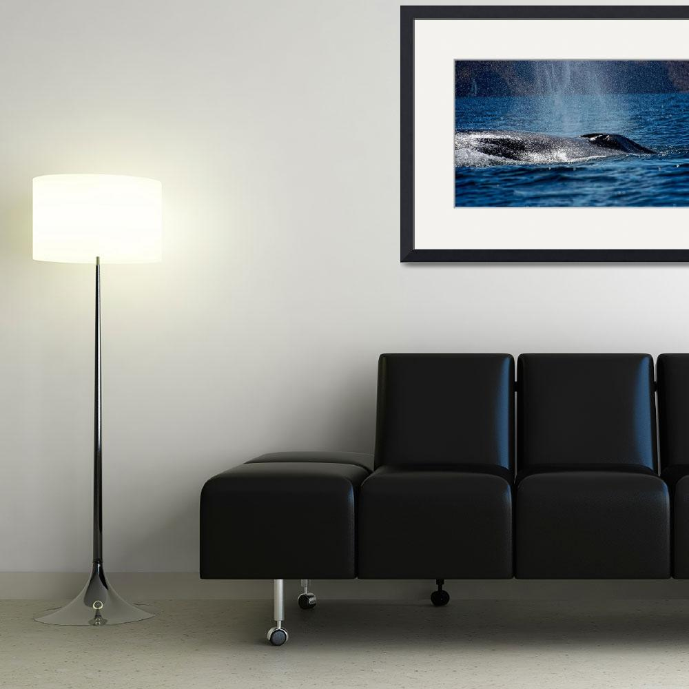 """Fin Whale Spouting&quot  (2011) by boppintheblues"