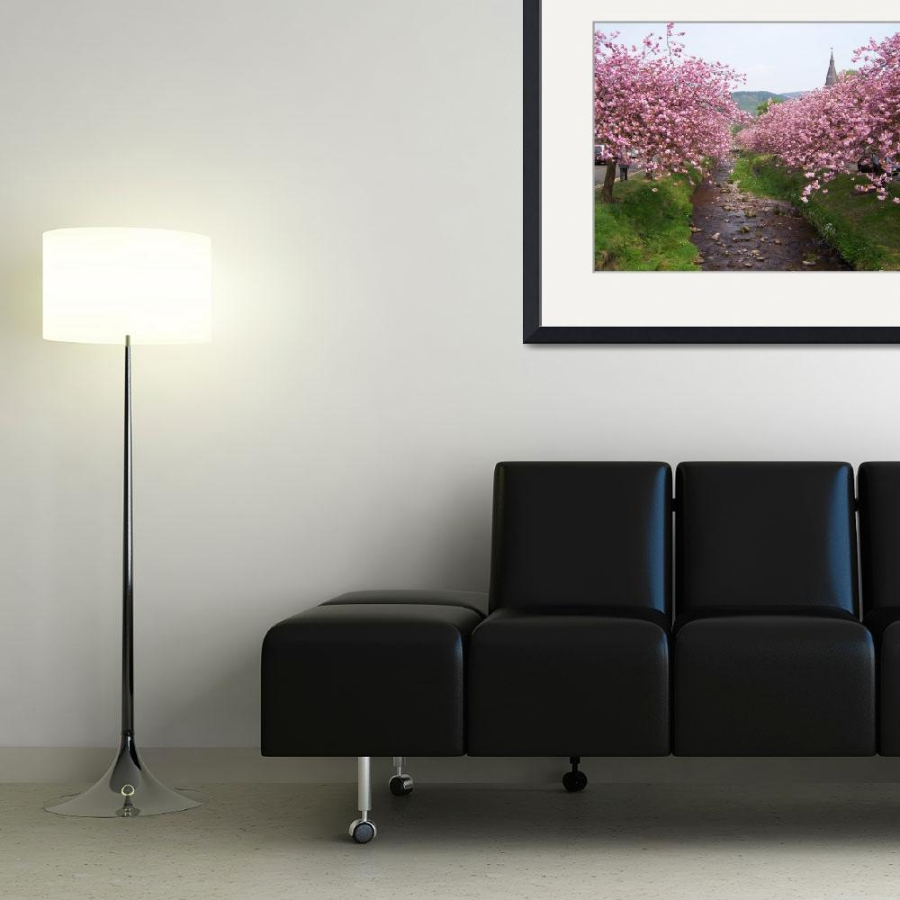 """""""Full Bloom&quot  (2008) by FifePhotographer"""