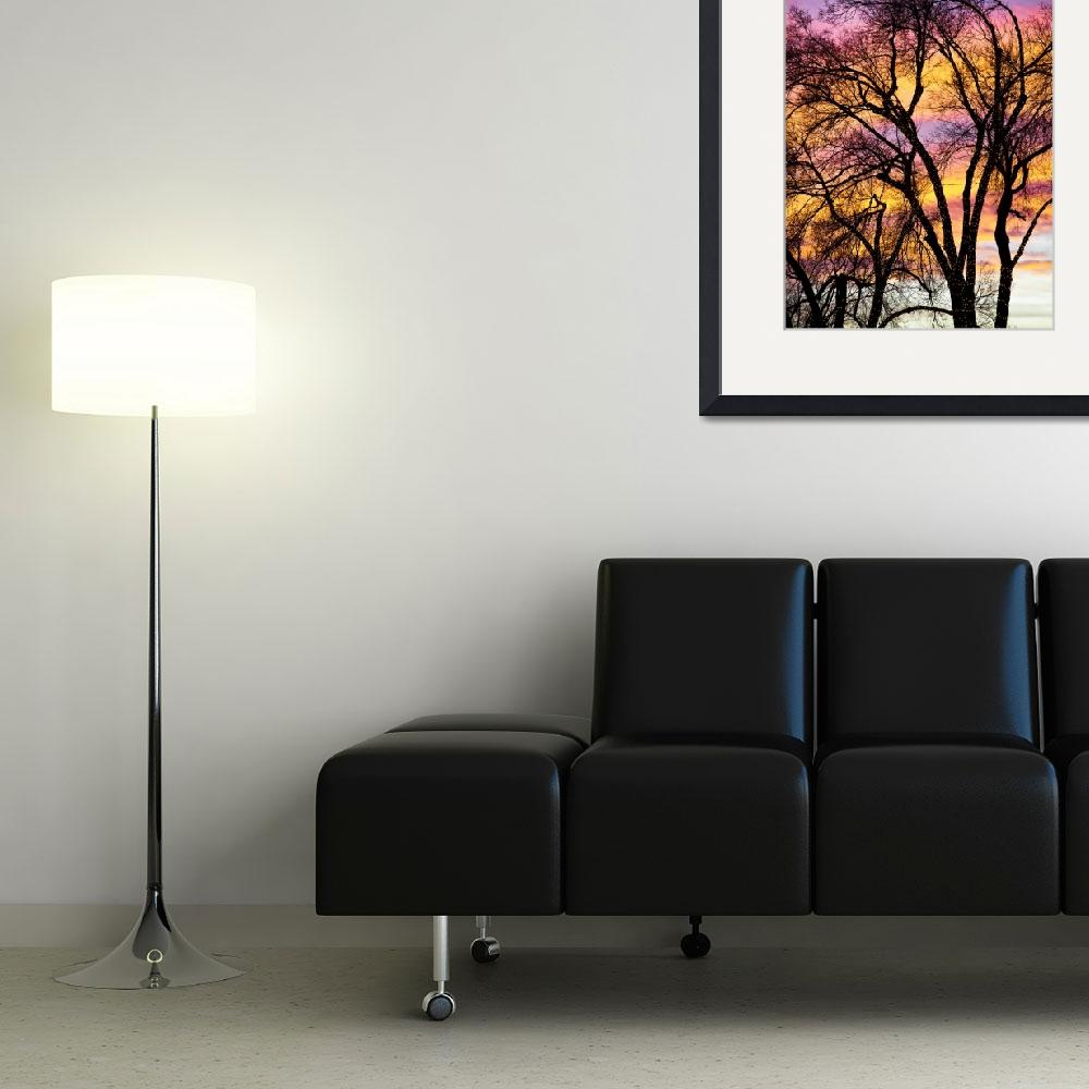 """""""Colorful Silhouetted Trees 13&quot  (2012) by lightningman"""