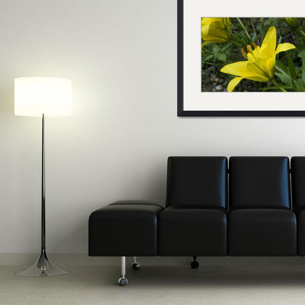 """""""Yellow Lilies&quot  (2008) by RickAcadie"""