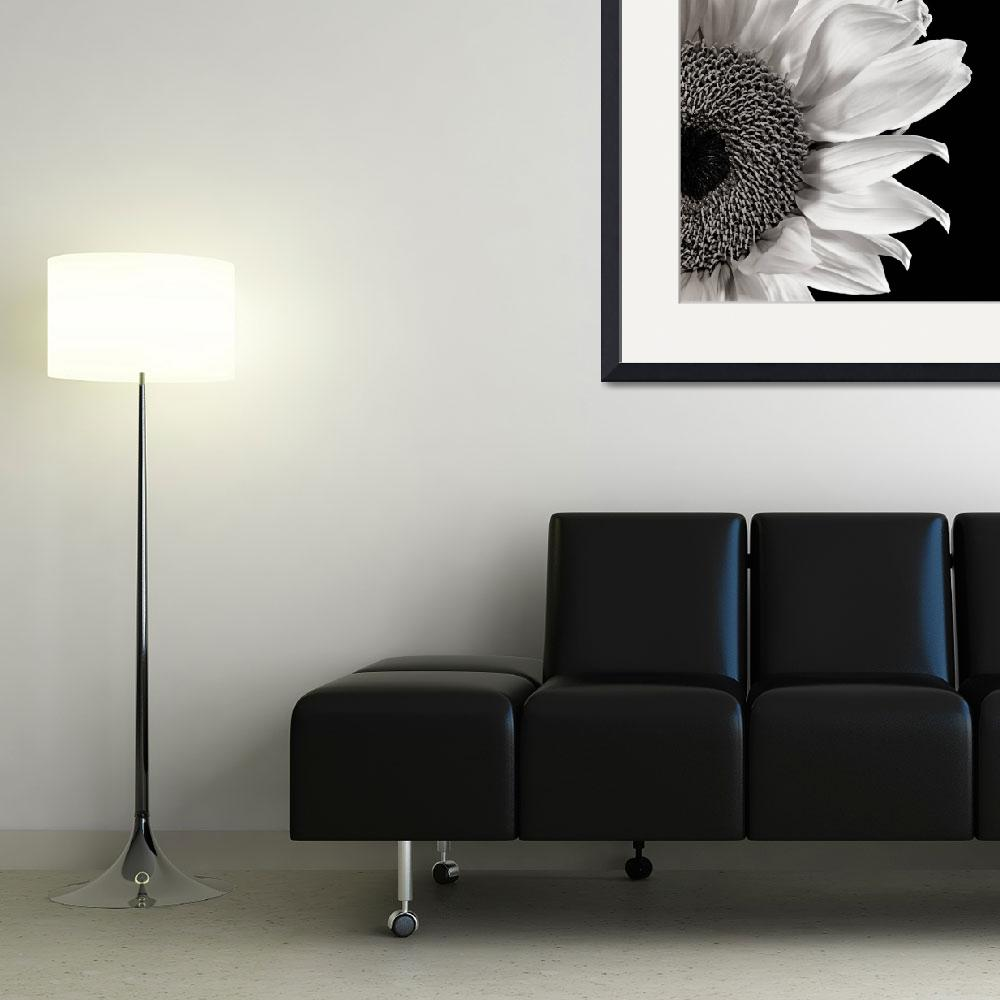 """""""Sunflower Study in Black and White&quot  (2011) by dawnleblanc"""