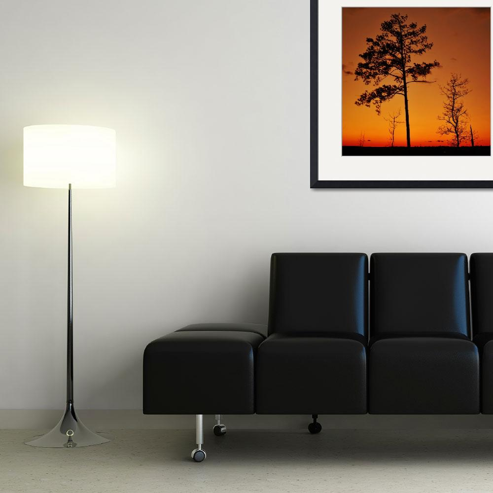"""""""Sunset Tree Silhouettes&quot  (2008) by ldfranklin"""