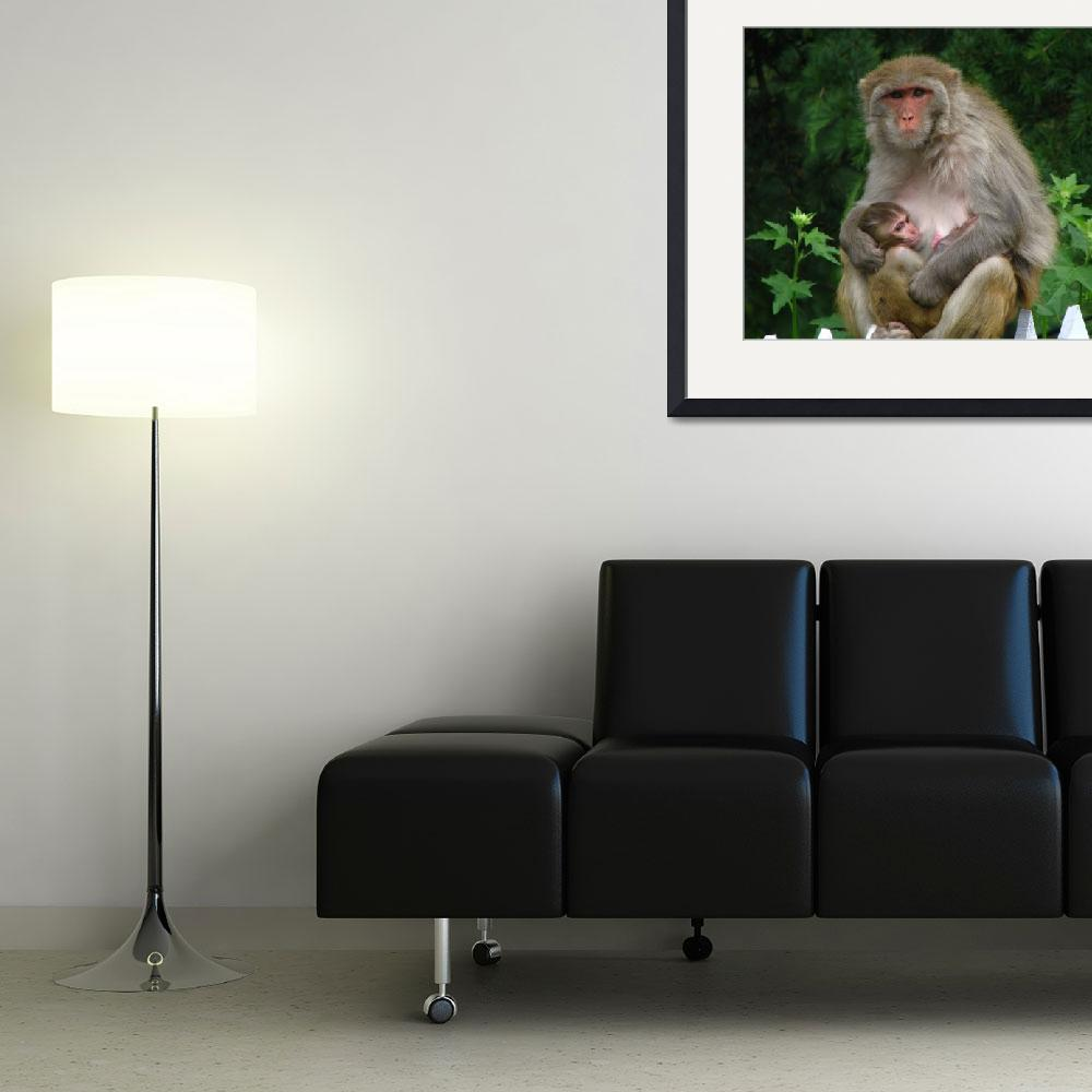 """""""Mother monkey with baby nathiagali IMG_924510""""  (2009) by davies"""
