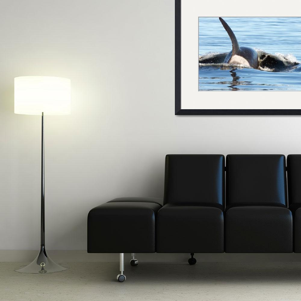 """Orca Whale (8046)""  (2008) by neilnathan"