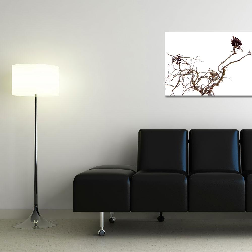 """""""Vultures On Watch""""  (2009) by DaamonTurne"""