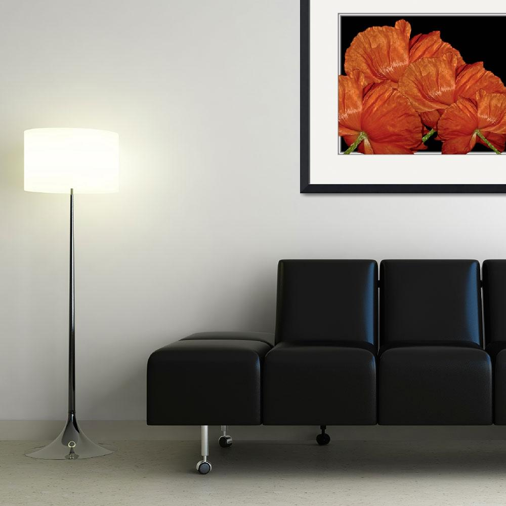 """""""Red Poppy Flowers&quot  (2009) by PhotographsByCarolFAustin"""
