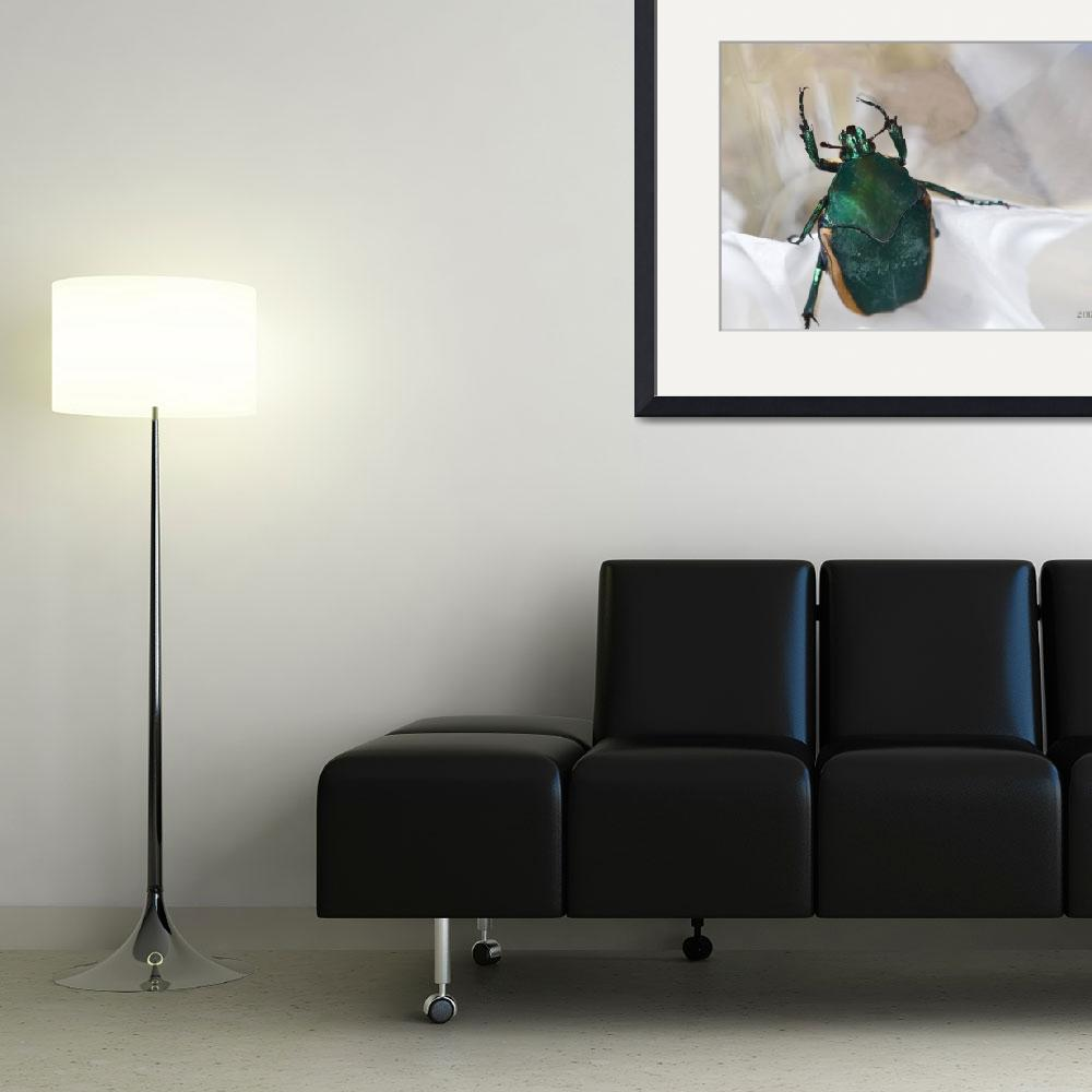 """""""Green Beetle with Reflection Issues&quot  (2012) by theblueplanet"""