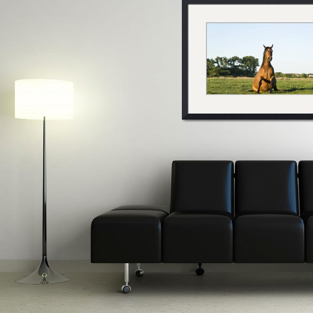"""""""Horse sitting on the grass&quot  (2010) by andrewaj"""