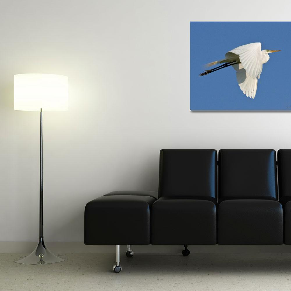 """Great White Egret""  (2009) by Quandee"