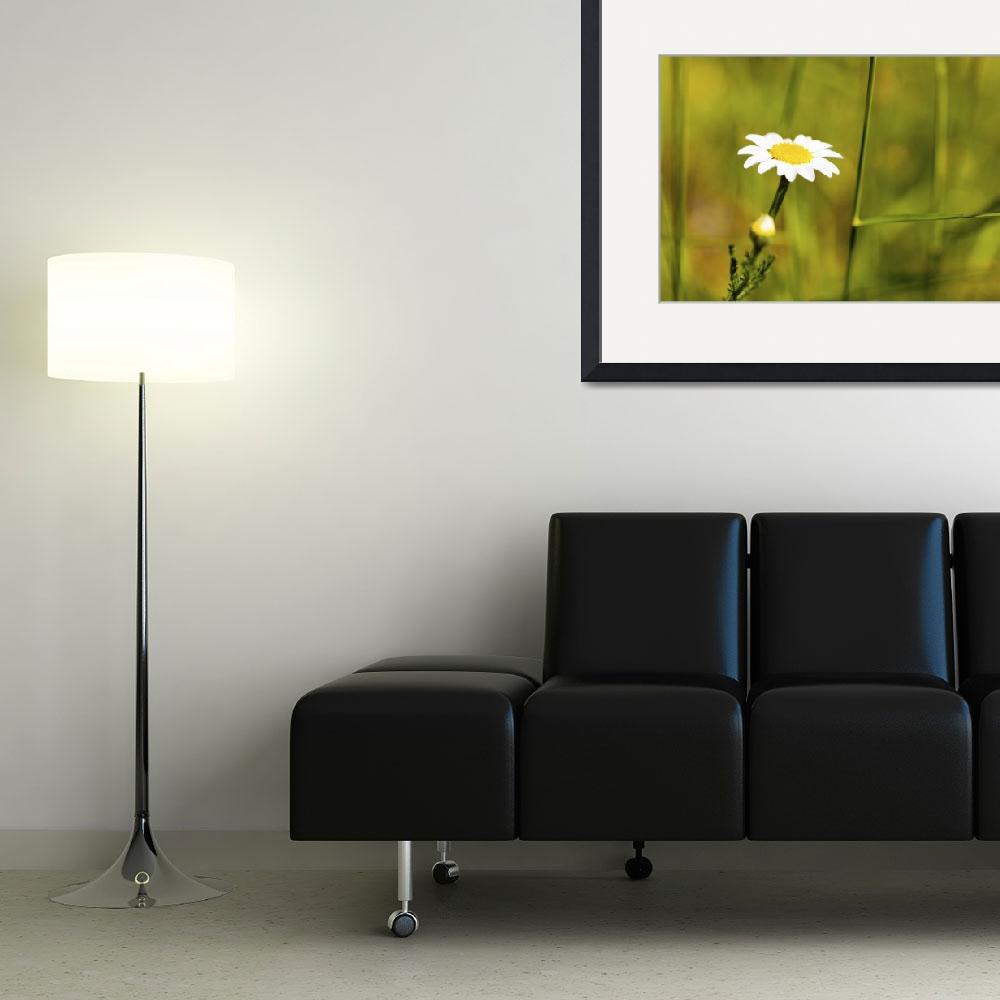 """""""Camomile&quot  (2011) by mgarrido"""