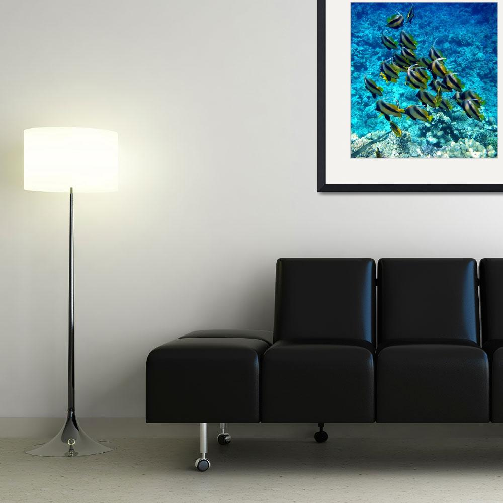 """""""bannerfish school 2&quot  (2011) by phototes"""