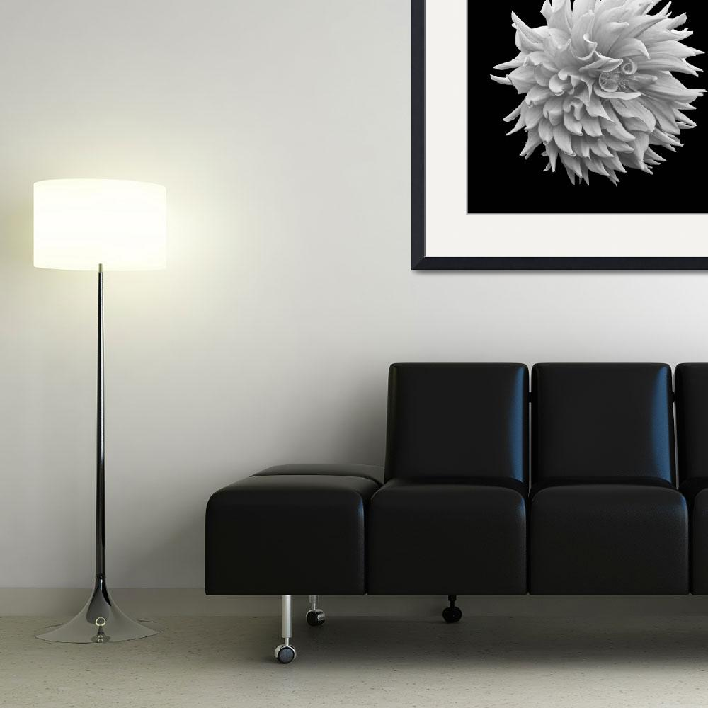 """""""Dahlia Ball&quot  (2009) by RussMartinPhotography"""