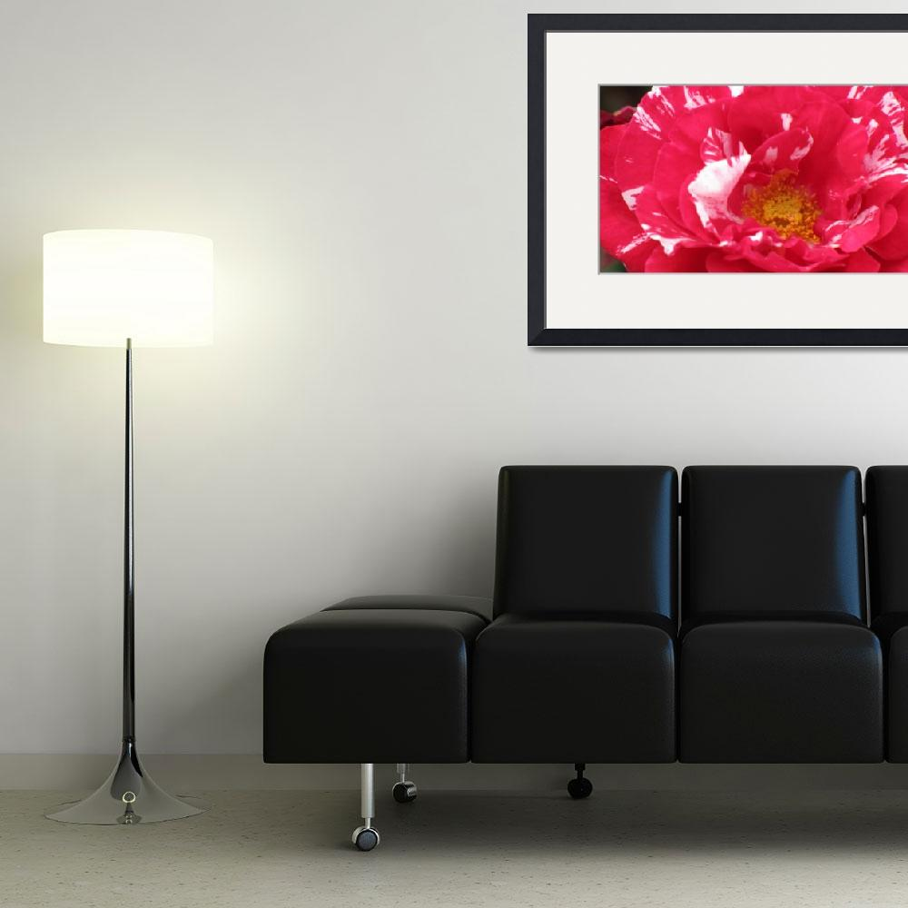 """""""Red-and-White-Painted Flower&quot  (2009) by HeatherLanza"""