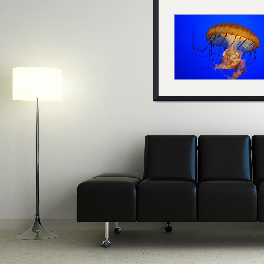 """""""Jelly fish""""  (2010) by HouseofStyle"""