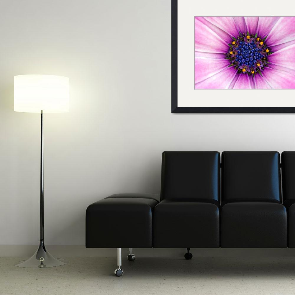 """""""African Daisy&quot  (2008) by MichaelSwanson"""