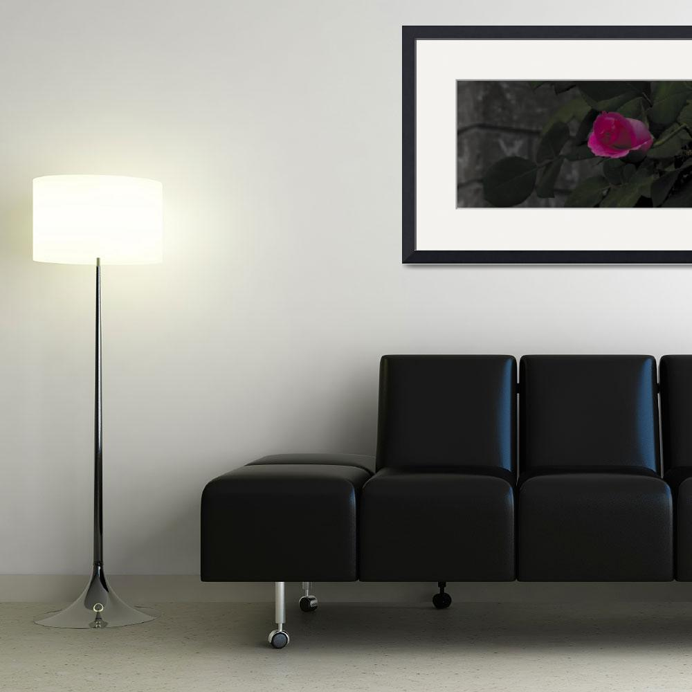 """""""Rose - 20100413&quot  (2010) by EmeraldReflection"""