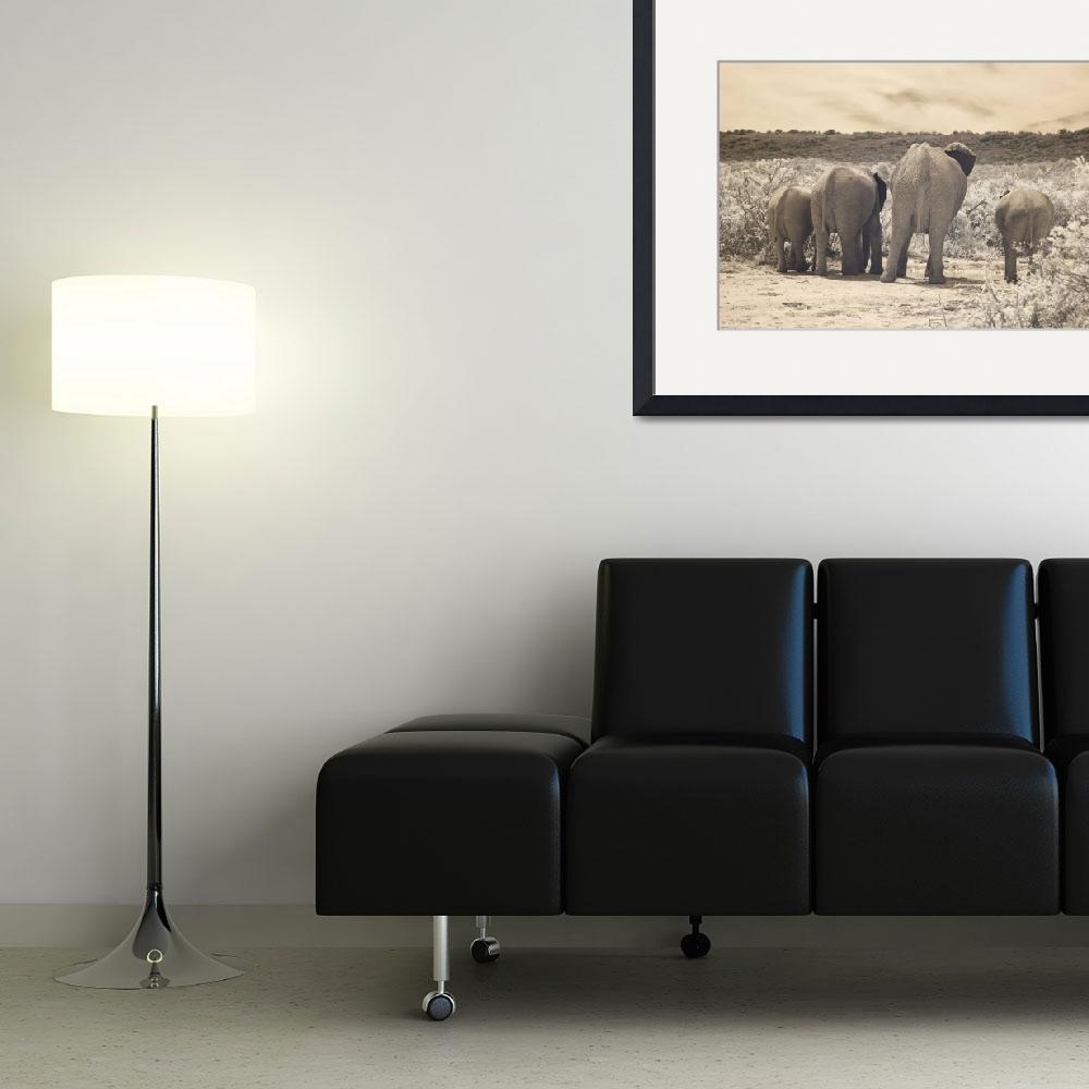 """""""Herd of Elephants""""  (2010) by redcirclephotography"""