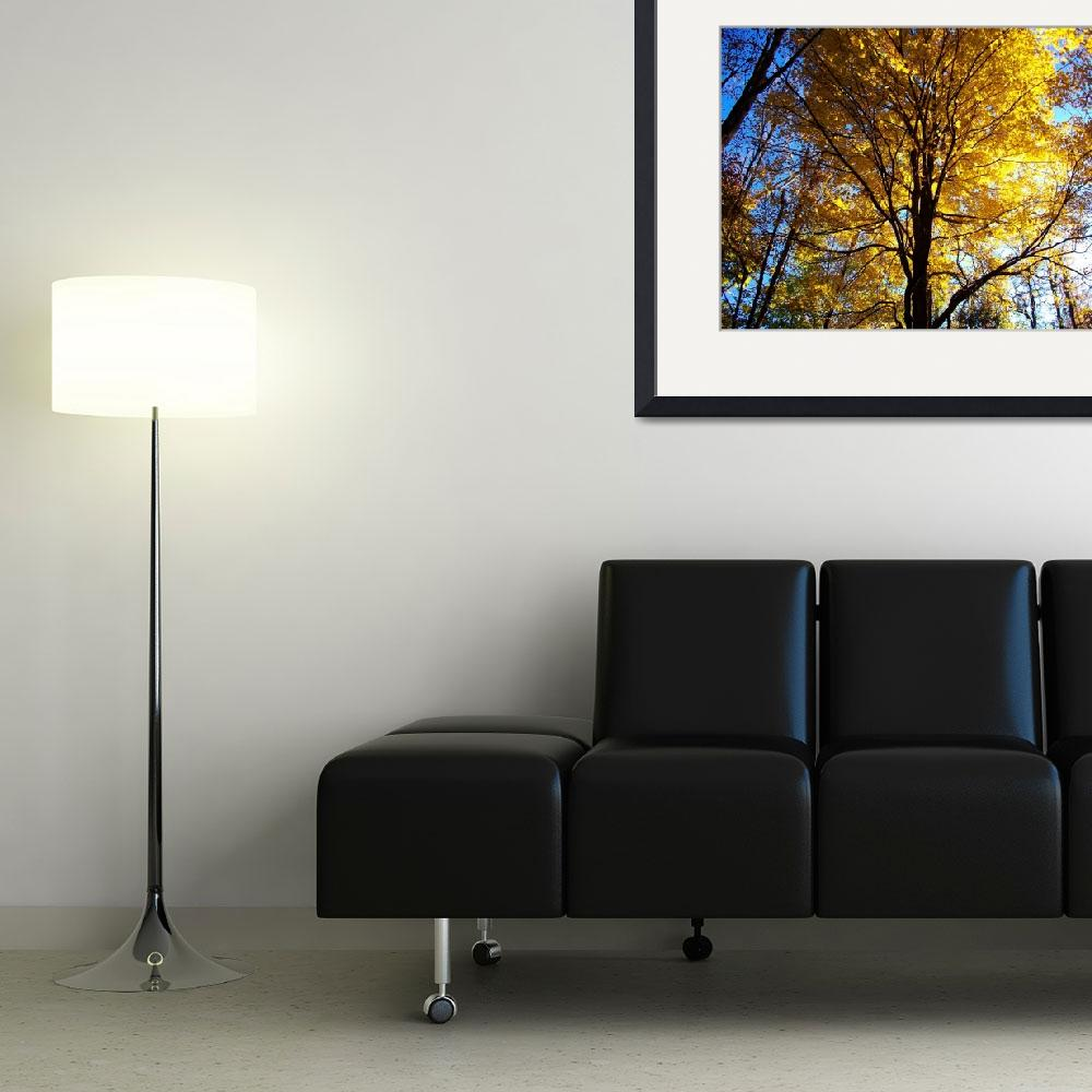 """""""Bright Yellow Tree&quot  (2009) by barrenphotography"""
