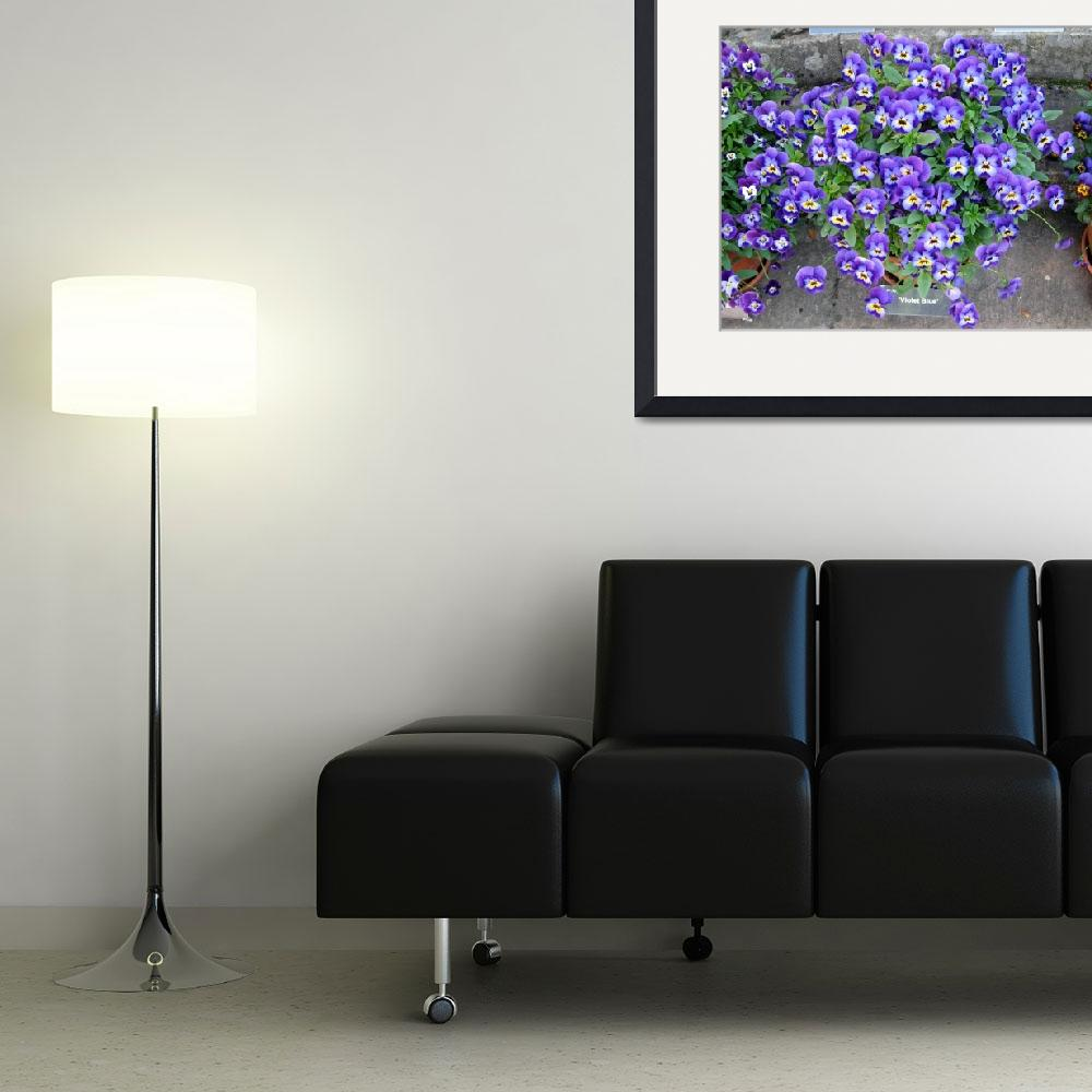 """""""violetblue_pansy""""  (2011) by Witchyborder"""
